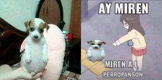 Perrito Panzón